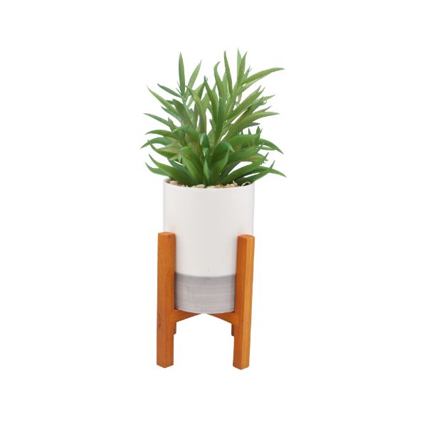 Picture of OLAF Plant in pot w/stand D13x26 WT/GN