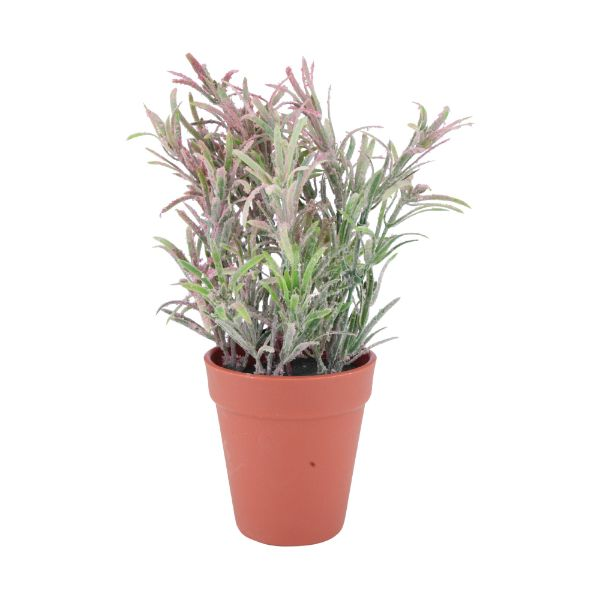 Picture of GRAZZIE Plant in pot 10x10x26cm GN/BN