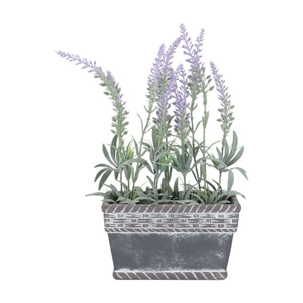 Picture of LAVIA Plant in pot 16.5x9.5x32cm VL/GY