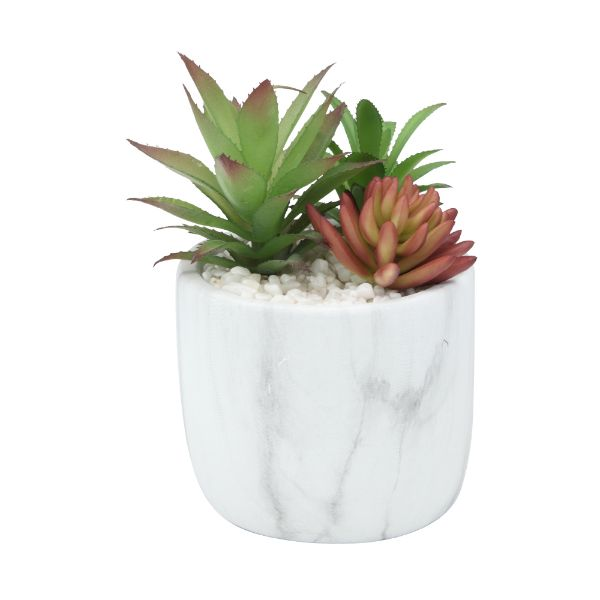 Picture of MABLE Succulent in pot D16x20 MTC